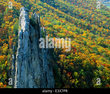 USA, West Virginia, Spruce Knob-Seneca Rocks National Recreation Area, Monongahela National Forest - Stock Photo