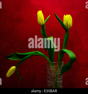 Tulips - Yellow on Red. Three yellow tulips in a vase against the background of red color. Play of yellow, green - Stock Photo
