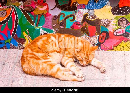 A sleepy feline finds a shady place outside a shop to take a cat-nap in the narrow streets of the Medina, Essaouira, - Stock Photo