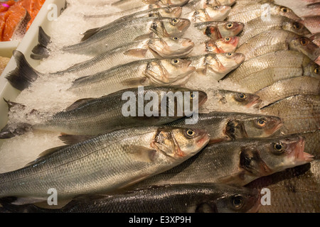 Porgies on ice in fishmonger's display in the Lower East Side in New York on Saturday, June 28, 2014. (© Richard - Stock Photo
