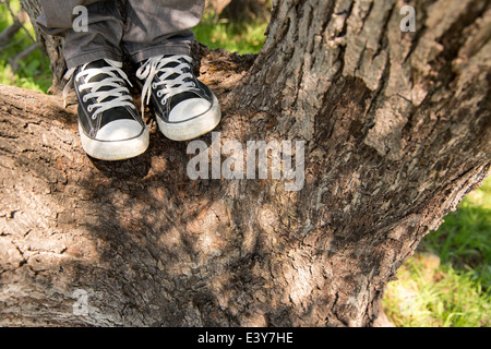 Legs and feet of young man standing on tree - Stock Photo