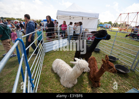 Agricultural Show, Northwood, Isle of Wight, England, UK - Stock Photo