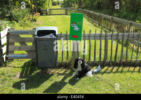 Cavalier King Charles Spaniel, male, tricolour, dispenser with bags for dog faeces, Texel, Netherlands - Stock Photo