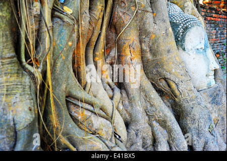 Stone buddha head traped in the tree roots at Wat Mahathat, Ayutthaya, Thailand - Stock Photo