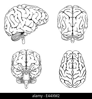 A diagram of a brain from the top side front and back in outline a diagram of a brain from the top side front and back in outline stock ccuart Images