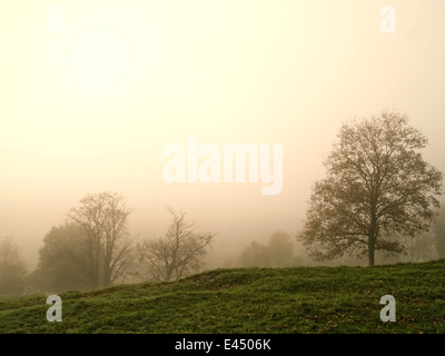 Horizontal portrait of oak trees in mist. Basque Country. Spain. - Stock Photo