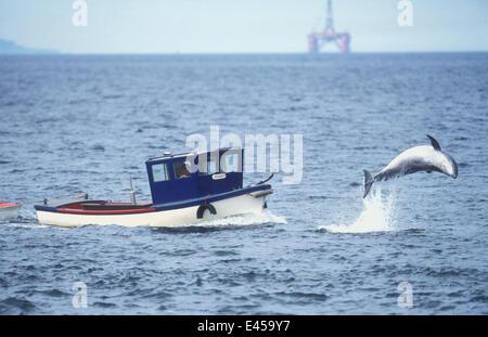 Bottle nose dolphin {Tursiops truncatus} breaching, Inner Moray Firth Scotland. - Stock Photo