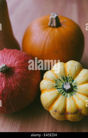 A variety of autumnal pumpkins & squashes ready for carving for Halloween into spooky designs and also for making - Stock Photo