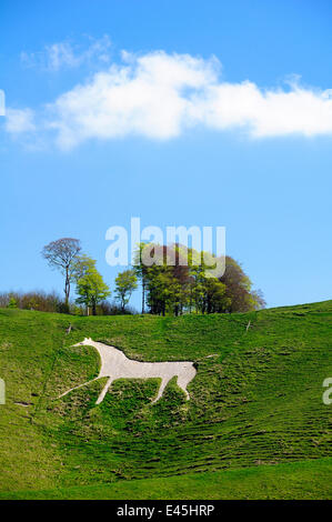 Cherhill white horse, first cut into chalk downland in 1780, Wiltshire, UK, spring 2009 - Stock Photo