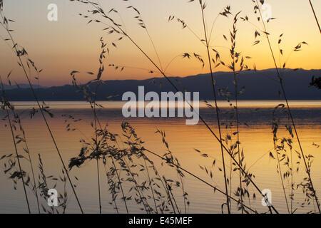 Wild oat grass (Avena fatua) silhouetted against the sun setting over Lake Ohrid, Lagadin region, Galicica National - Stock Photo
