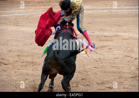 Matador in final stages of bullfight leaps over bull to pierce bull between horns with blade, Plaza de Toros, Mexico - Stock Photo