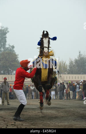 A Sikh man makes his Nukra horse dance to the rhythm of a drum during the Maghi Mela festival, Muktsar, Punjab, - Stock Photo