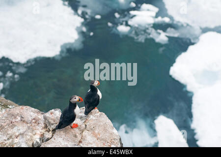 Pair of Atlantic puffins (Fratercula arctica) perched on cliffs along coast of Svalbard in summertime, Arctic. - Stock Photo