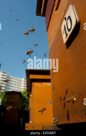 Honey bees (Apis melifera) flying through the city. Paris, France - Stock Photo