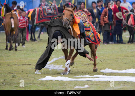 A Khampa warrior, mounted on his running Tibetan horse, tries to catch white scarves laid out on the ground, during - Stock Photo