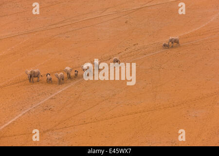 Aerial view of African elephants (Loxodonta africana) mother and calf walking through desert landscape, Amboseli - Stock Photo