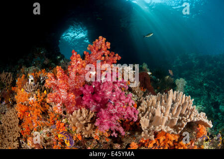 Swim-through at dive site called Boo with colourful corals in the foreground. Misool, Raja Ampat, West Papua, Indonesia - Stock Photo