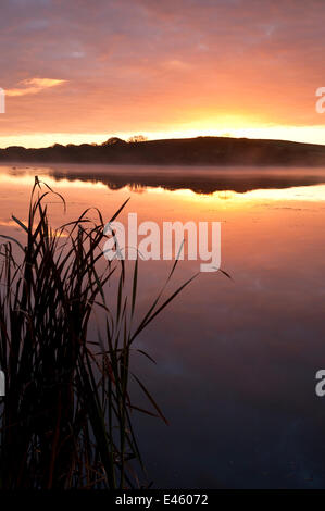 Lower Tamar Lake at sunrise with reflections on the water. Nr Bradworthy, Devon/Cornwall border, October 2010 - Stock Photo