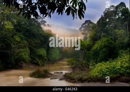 Dawn over the Segama River, with mist hanging over lowland rainforest. Heart of Danum Valley, Sabah, Borneo. - Stock Photo