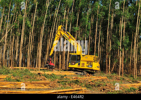 Machinery that cuts, peels and calculates the volume of the wood, cutting eucalyptus trees in the municipality of - Stock Photo