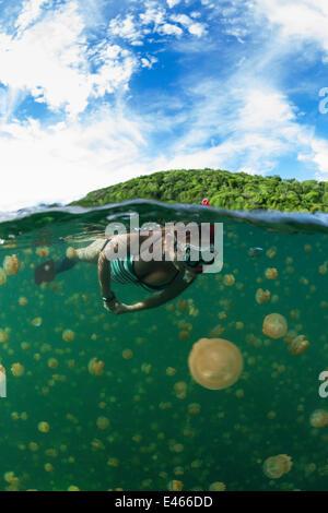 Snorkeler swimming with harmless Jellyfish (Mastigias papua etpisonii), Jellyfish Lake, Rock Islands, Palau, Micronesia - Stock Photo