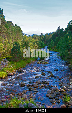 The Allt Mor stream in Glenmore Forest Park the Cairngorm plateau visible behind, near Aviemore, Scottish Highlands, - Stock Photo