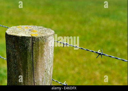 Barbed wire fence on wooden post - Stock Photo