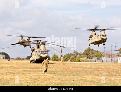 Three US Army Chinook helicopters landing - Stock Photo