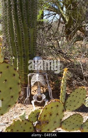 Skeleton leaning against saguaro cactus in desert setting - Stock Photo
