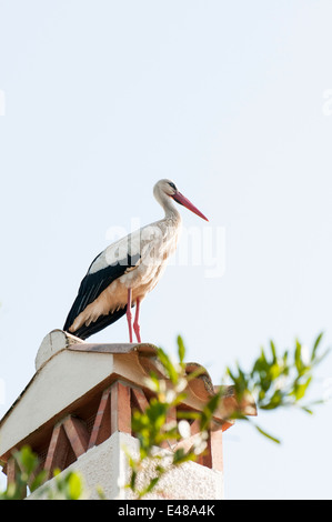 Stork resting on top of the house - Stock Photo