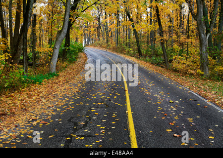 A Curving Blacktop Road Through A Lush Forested Park On A Rainy Autumn Day At Sharon Woods, Southwestern Ohio, USA - Stock Photo