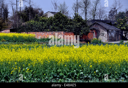PENGZHOU, CHINA: Yellow rapeseed flowers and a Sichuan province farmhouse