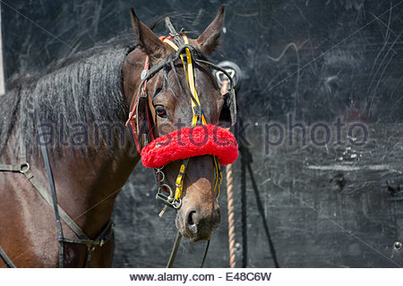 Aberystwyth, Wales, UK. July 5th 2014.  The Ceredigion Trotting Club held a harness racing event in glorious sunshine - Stock Photo