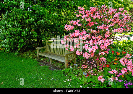 Old wooden bench with blooming rhododendron in the old garden - Stock Photo