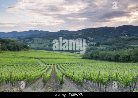 Vineyards near to Greve in Chianti. The area is part of the famous Chianti wine region in Tuscany. - Stock Photo