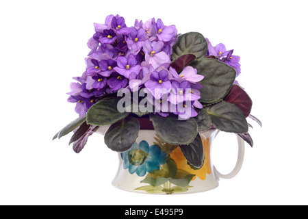 Purple african violet flowers in a vase isolated on white background - Stock Photo