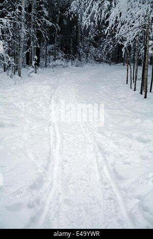 ski tracks in a forest by a winter evening - Stock Photo