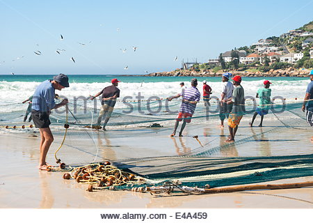 Trek fishermen standing on beach pull in nets of small silver colored fish known locally as harder, Fishhoek Bay, - Stock Photo