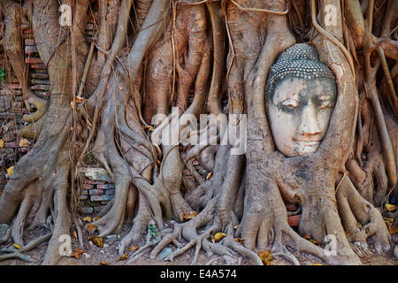 Stone Buddha head in roots of a fig tree, Wat Mahatat, Ayutthaya Historical Park, UNESCO, Ayutthaya, Thailand, Southeast - Stock Photo