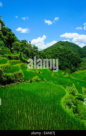 Bangaan in the rice terraces of Banaue, UNESCO World Heritage Site, Northern Luzon, Philippines, Southeast Asia, - Stock Photo