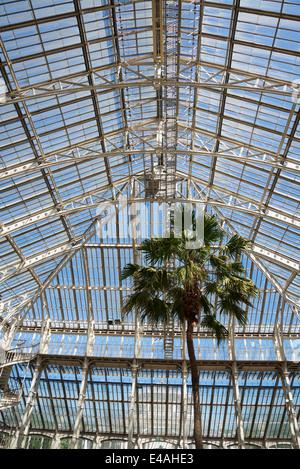 Palm tree in Temperate House, Kew Royal Botanic Gardens, London, UK - Stock Photo