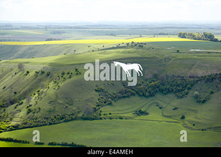 Westbury white horse is the oldest of the Wiltshire horses on the edge of the Bratton Down. - Stock Photo