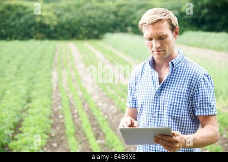 Farmer In Field Of Organic Crops Using Digital Tablet - Stock Photo
