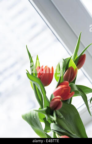 Bouquet of gentle red tulips in spring time - Stock Photo