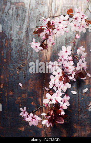 Spring blossom on rustic wooden table - Stock Photo