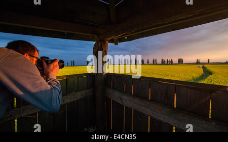 Man on lookout tower taking picture of colza field, Tuscany, Italy - Stock Photo