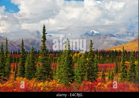 Fall color and the Alaskan range outside of Denali National Park, Alaska. - Stock Photo