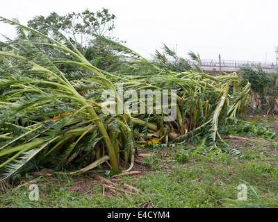 Typhoon Neoguri Okinawa, Japan. July 9th 2014, heavy rains and flooding continue as islands starts recovery. - Damage - Stock Photo