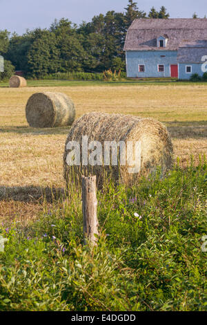 Hay bales in a rural farm setting. - Stock Photo
