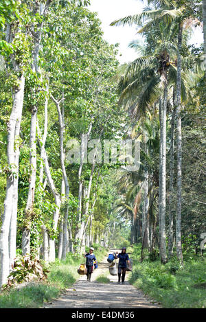 The towering trees of Banyuwangi province offer shade to home-coming plantation workers. - Stock Photo